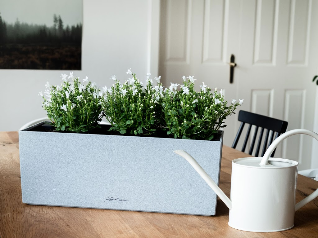 Pflanzen brauchen Wasser - 5 Tipps, wie du das Gießen nicht mehr vergisst