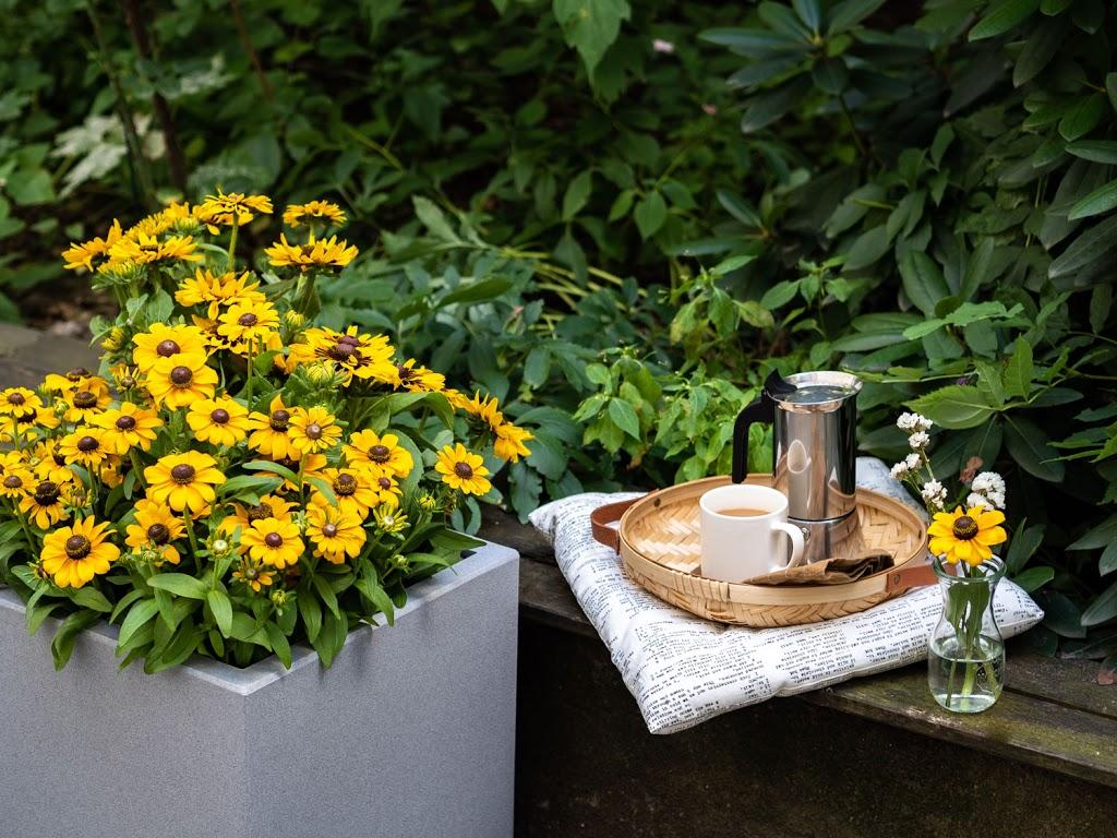 Echinacea: Tipps & Tricks für die pflegeleichte Gartenblume #pflanzedesmonats