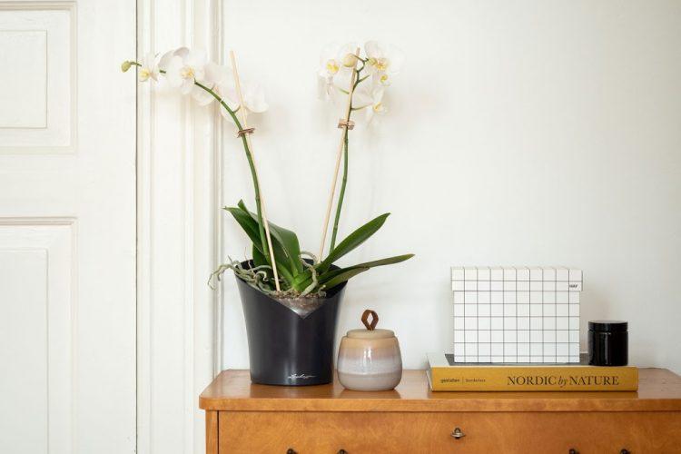 orchidee-tipps-tricks-fur-die-pflege2.jpg