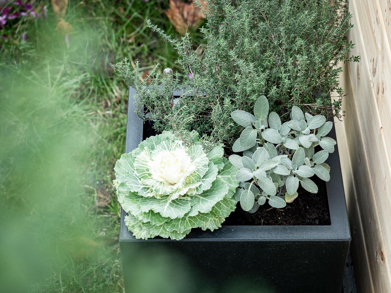 Herbstbepflanzung - Ein Pflanztopf, drei Ideen