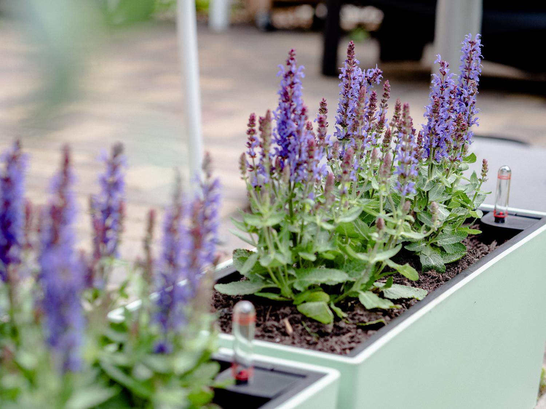 Solitärstauden: Tipps & Tricks für die bunte Gartenvielfalt für Bienen, Hummeln & Insekten