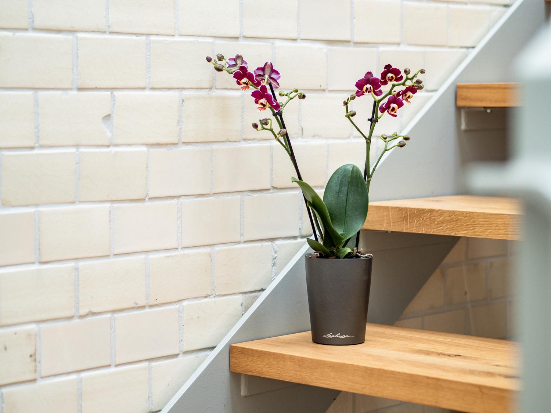 Orchidee - Tipps & Tricks für die edle Zimmerpflanze