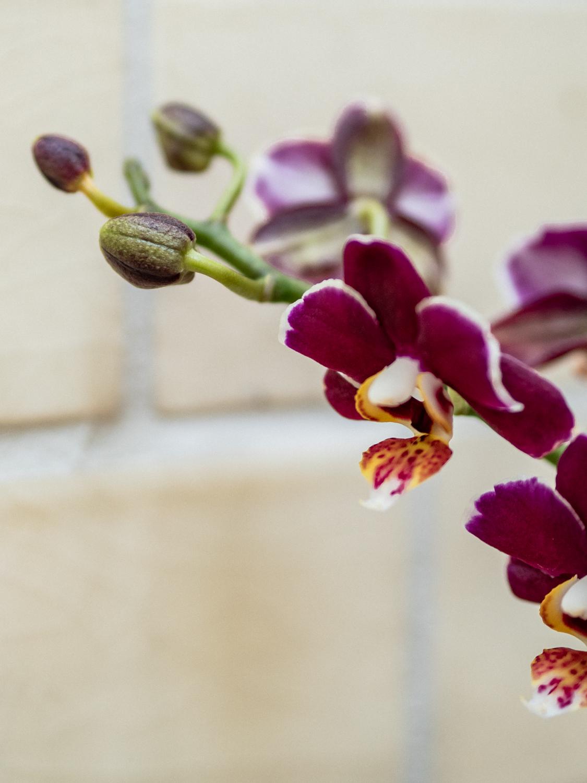 tipps und Tricks Orchideen Pflege